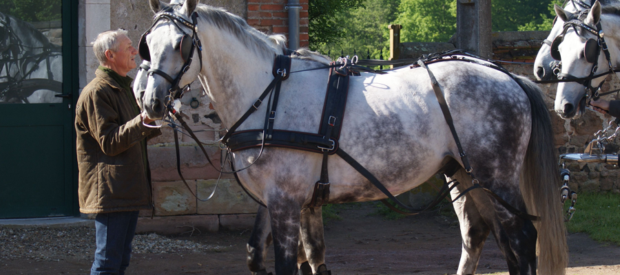 le cheval attelé