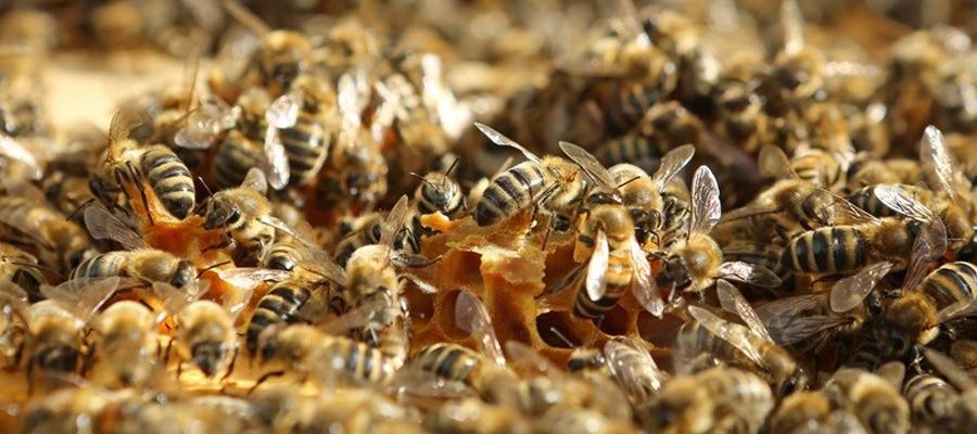 « ruche qui dit oui »